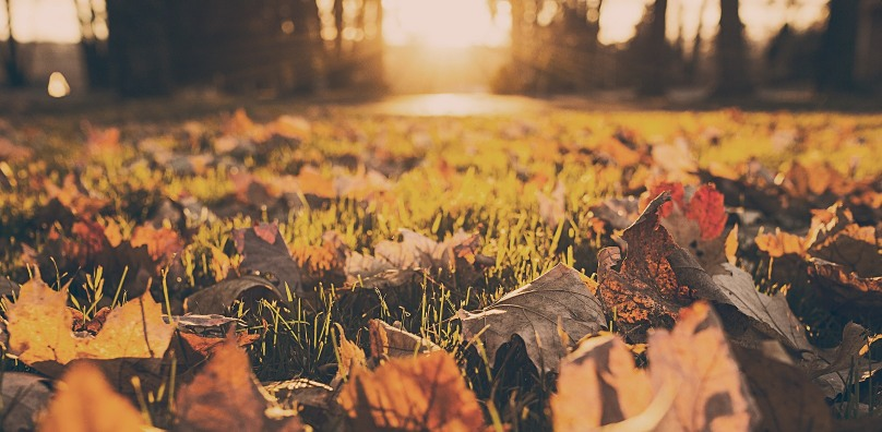 Autumn leaves Suffolk